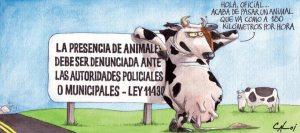 animal-caloi